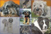 z0 Commission Info for Dog Paintings